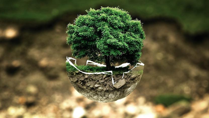 politico-transition-ecologique